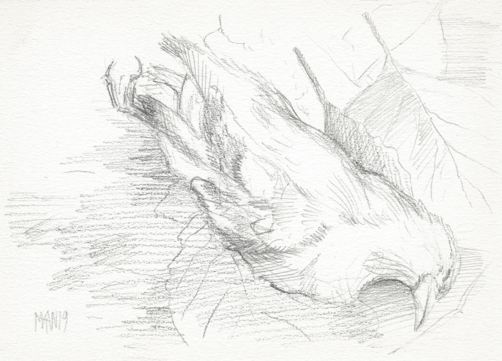 Veluwe, Dode Vogel 1 (potlood, 2019)