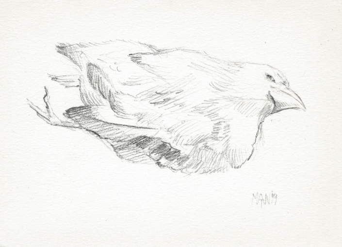 Veluwe, Dode Vogel 2 (potlood, 2019)